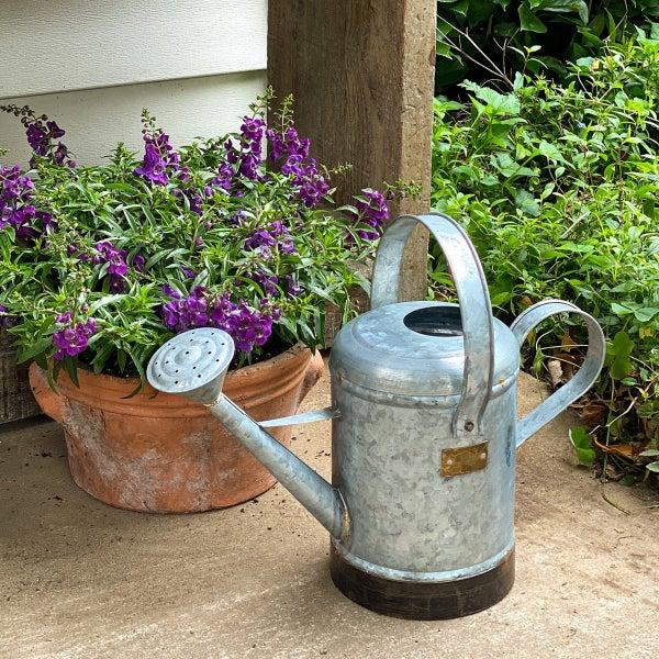 Petite Potager Metal Watering Can