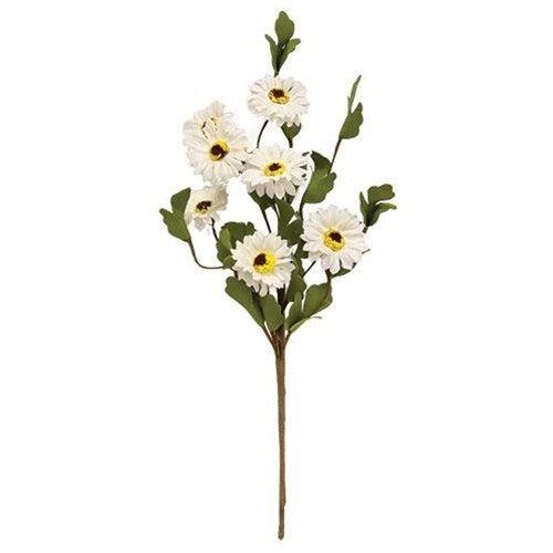 White Daisy Pick