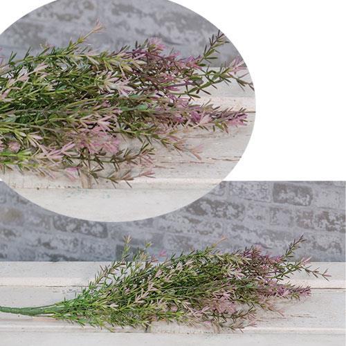 Asparagus Bush - Lavender
