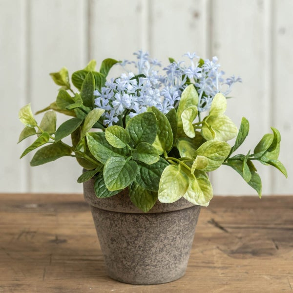 Potted Jasmine with Mint
