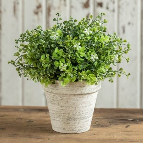 Flowering Greens in Cement Pot