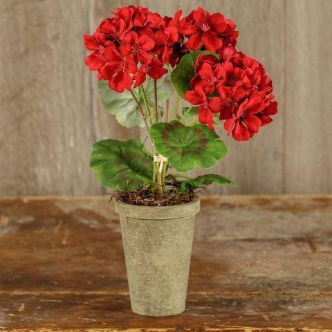 """14"""" Potted Red Geranium"""