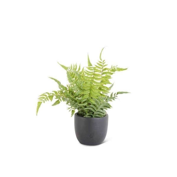 """Potted 13"""" Fern"""