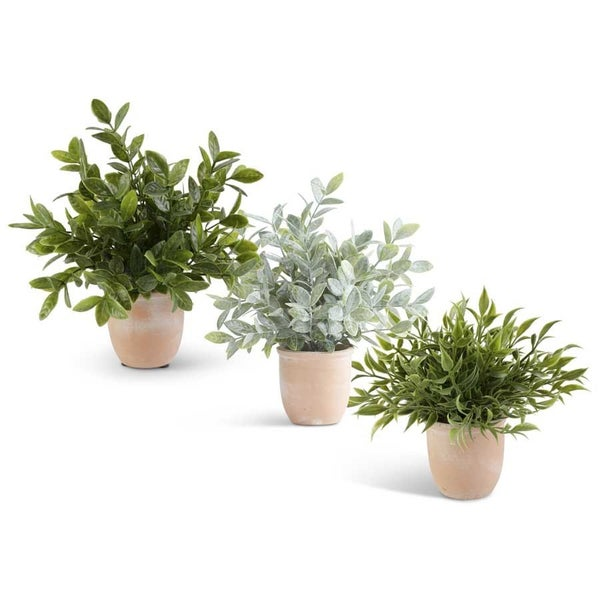"""Potted Herb in Terracotta Pot, 11"""""""