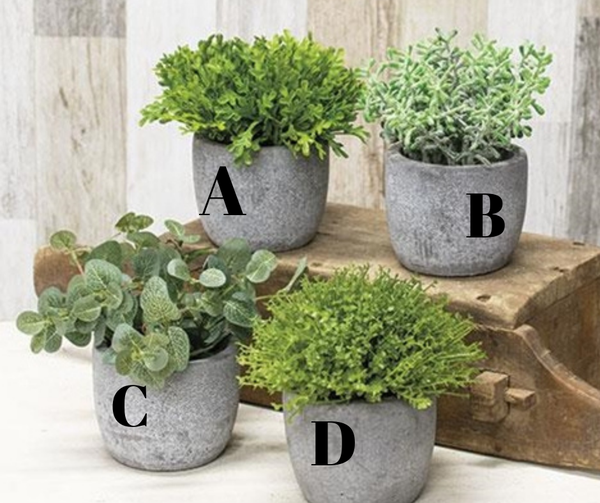Small Potted Greenery