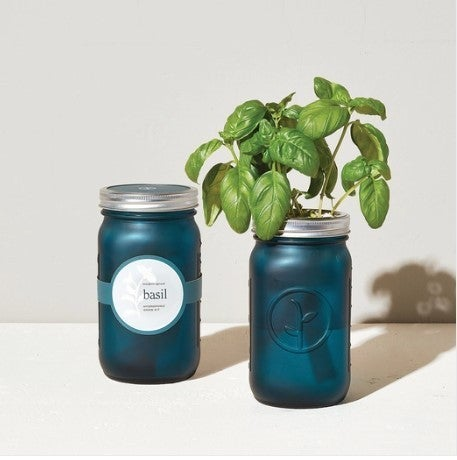Basil - Garden Jar QT
