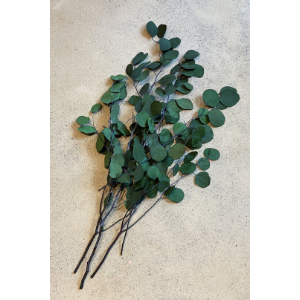 Preserved Eucalyptus Bunch