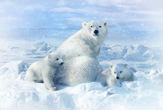 "43"" x 30"" Fabric Panel, Call of the Wild, Polar Bears"