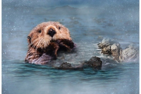 "43"" x 28"" Fabric Panel, Call of the Wild, Otter"
