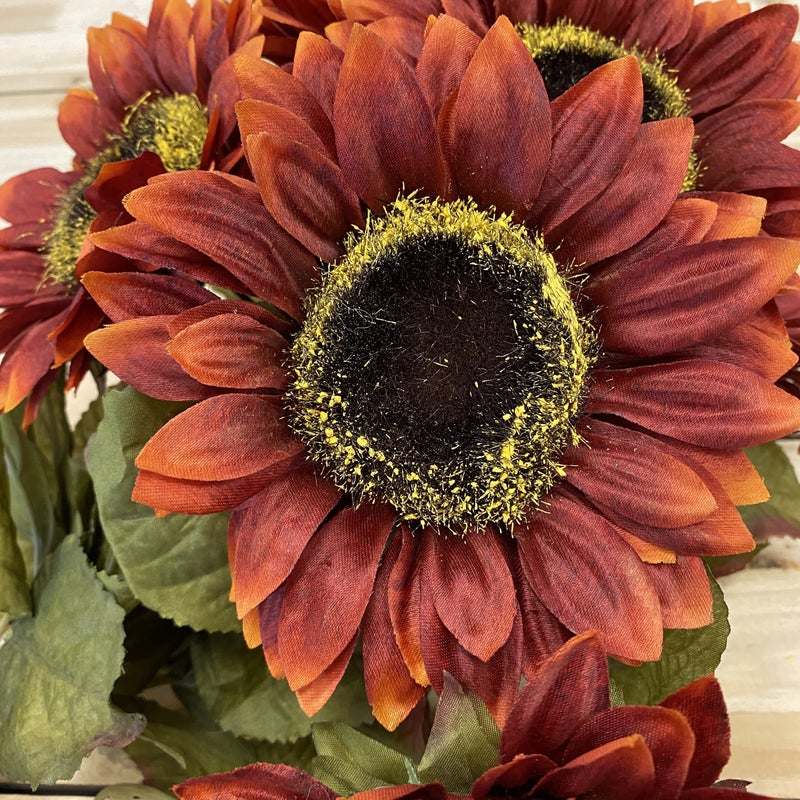 Sunflower Bush- Brown/Orange