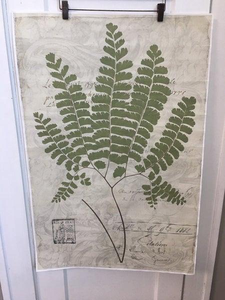 Monahan Papers Fern print
