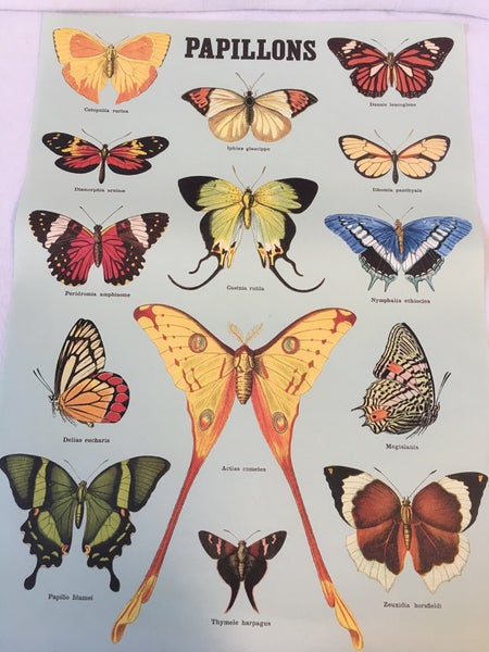 """Papillon"" paper by Cavallini"
