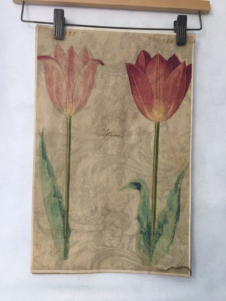 Monahan paper-2 pink tulips