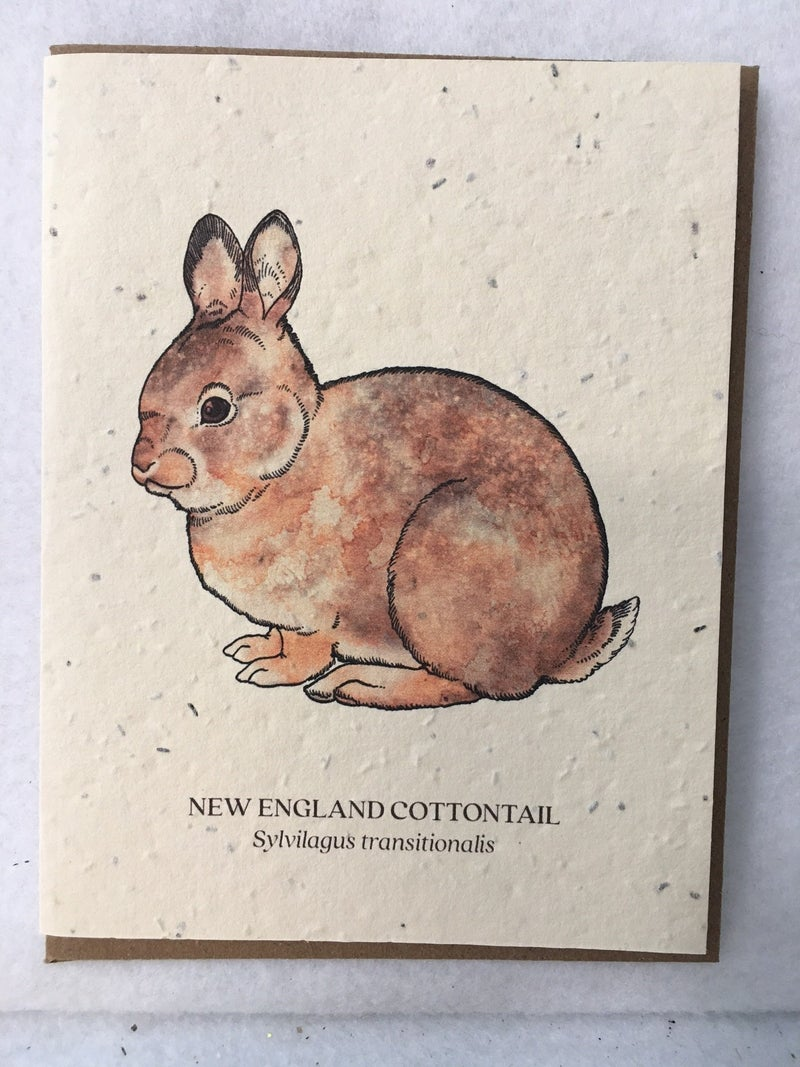 New England Cottontail card