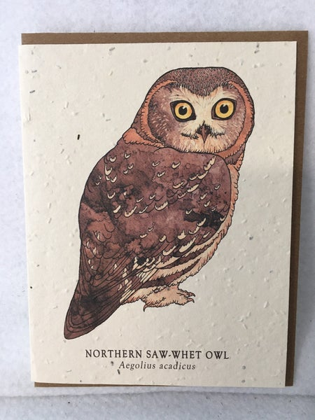 Northern Saw-whet owl seed card