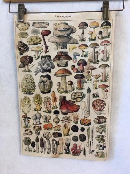 Mushroom variety paper