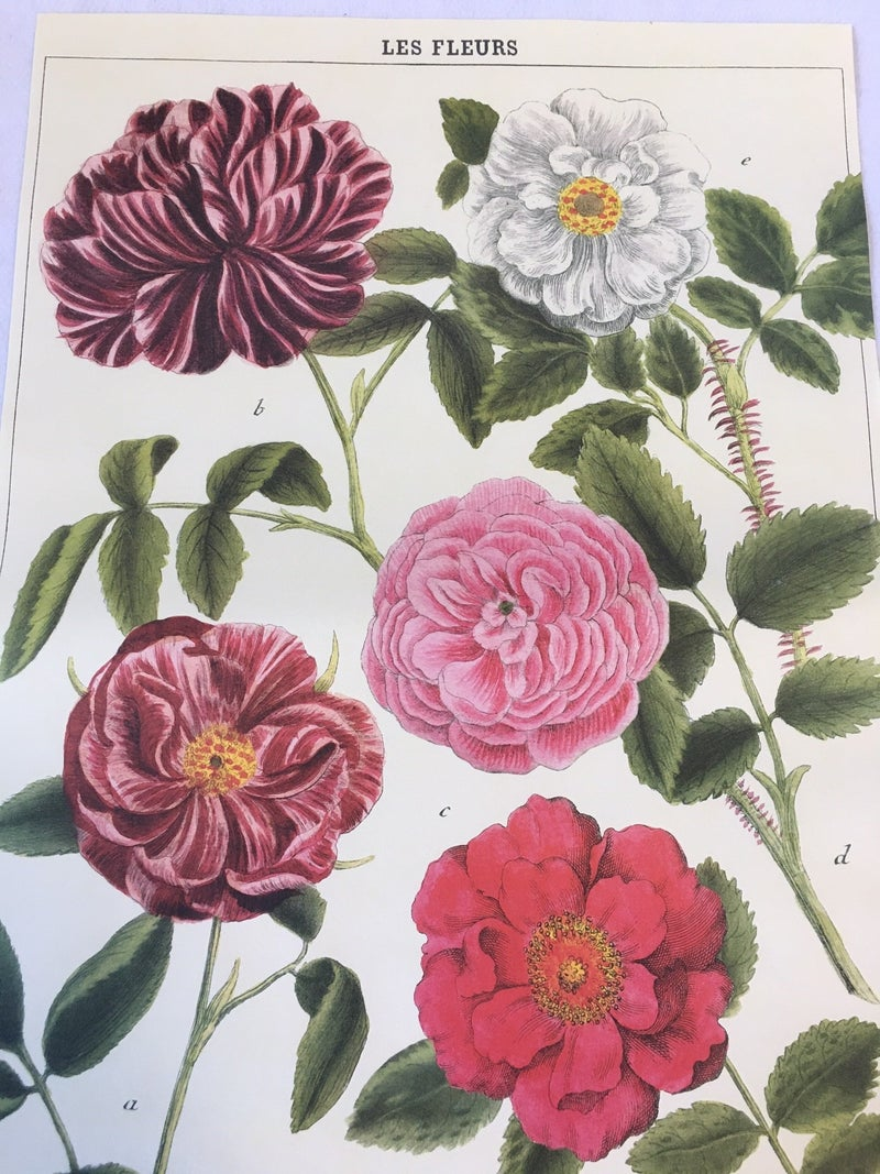 "Cavallini ""Le Fleurs"" paper"