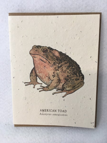 American Toad seed card