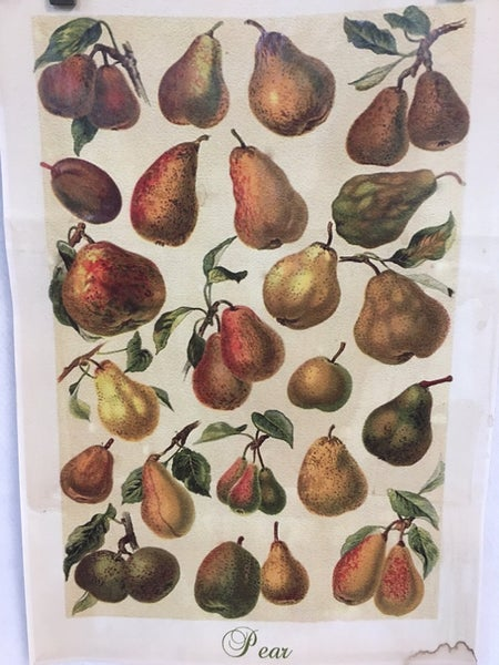 Monahan pear paper
