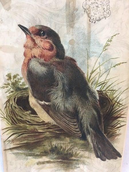Monahan bird paper