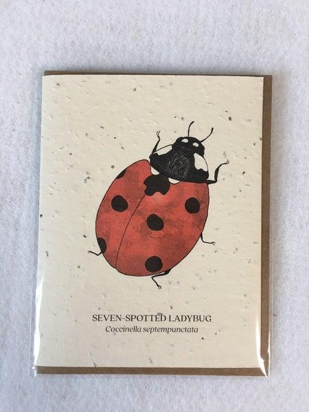 Plantable card with Ladybug