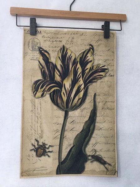 Monahan paper-purple tulip