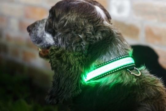 Green LED Light Up Pet Collar | SAFE & VISIBLE