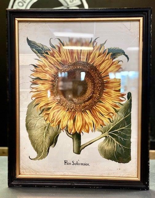 """24"""" Framed Sunflower Prints"""