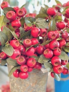 Premium Red Berries