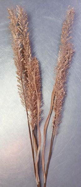 Fall Wheat Stem