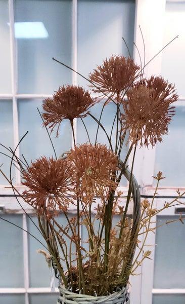 Fall Allium Pick