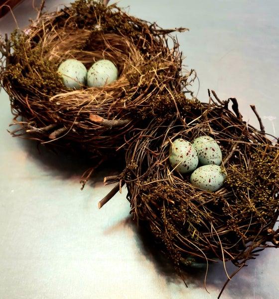 Robin's Nest w/ Eggs