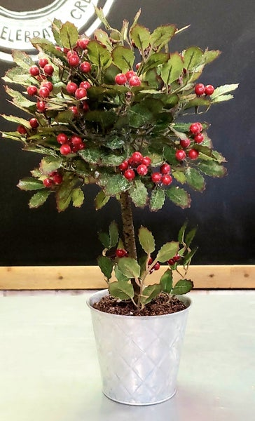 Potted Holly Bush