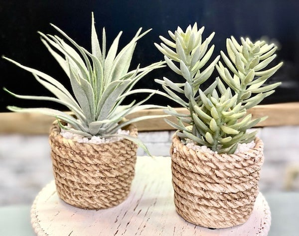 Rope Pot Succulents
