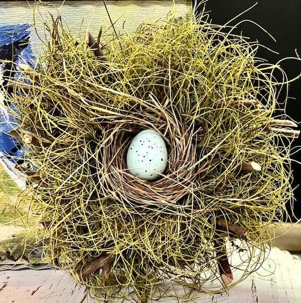 Single Blue Jay Nest