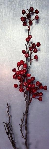 Premium Cranberry Pick