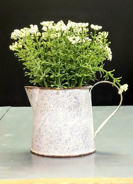 Potted Cream Flowers in Watering Can