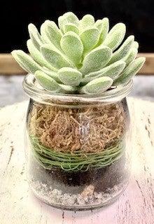 Succulent In Glass Jar