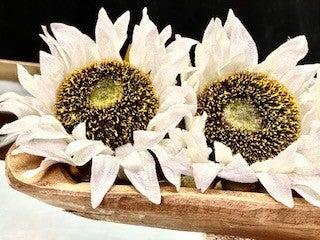 Cream Sunflower Picks