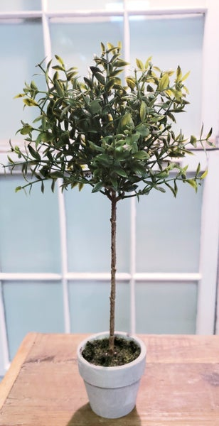 Potted Boxwood Topiary