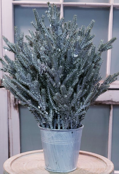Potted Snowy Juniper Tree