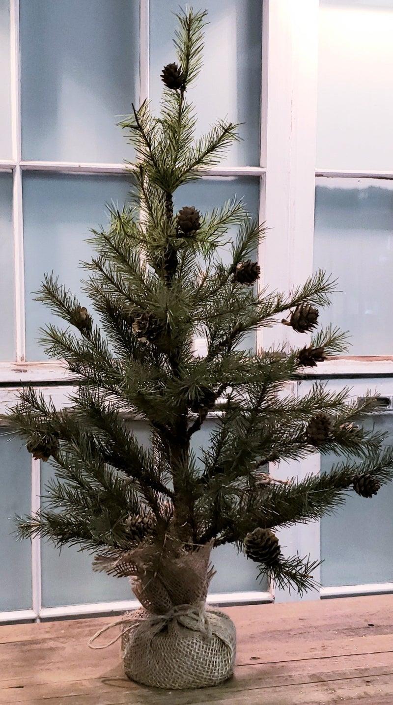 Large Pine Tree w/ Burlap