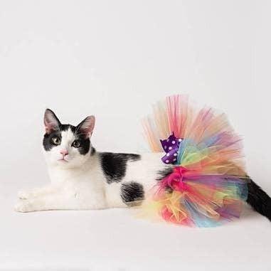 Rainbow Pet Tutus