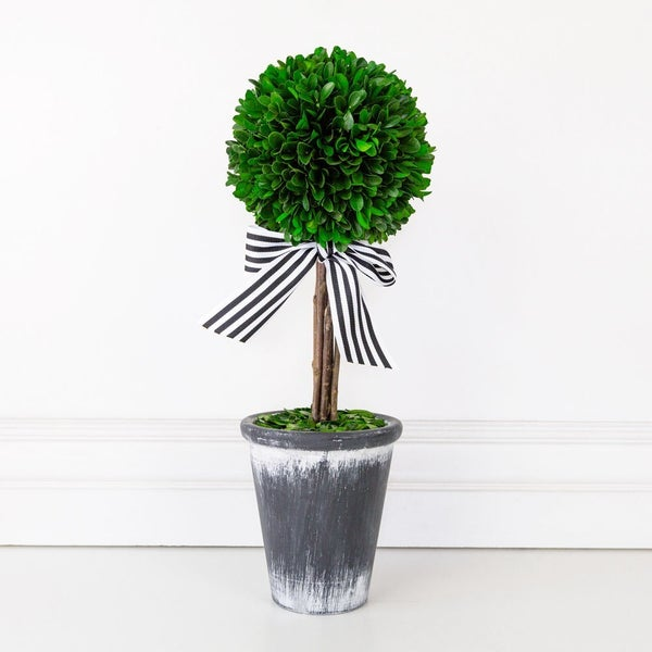 16.5 Potted Tree