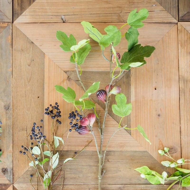 PH Fig Branch
