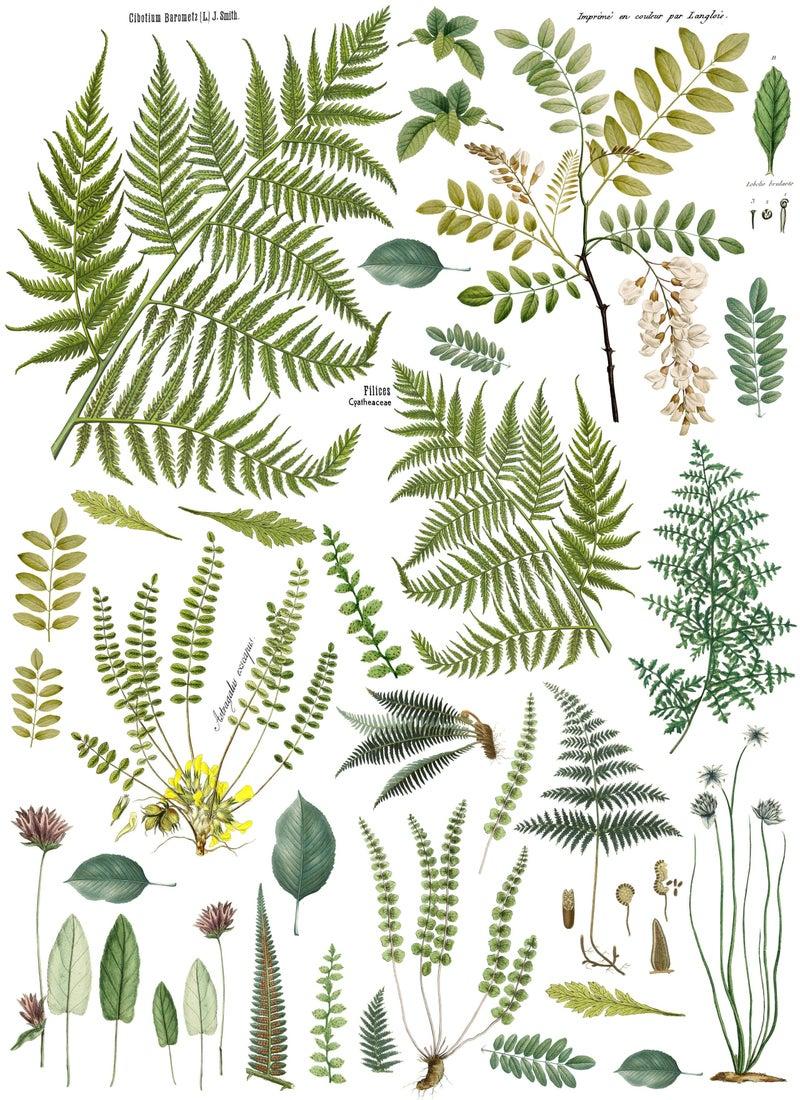 IOD Transfer- Fronds Botanical 24x33