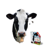 Puzzle I Am Cow
