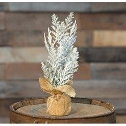 """Frosty Cedar Tree, 10"""""""