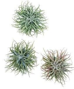 Assorted Air Grass Orb