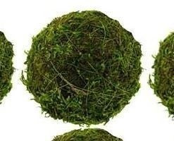 """2 """" Moss Ball"""